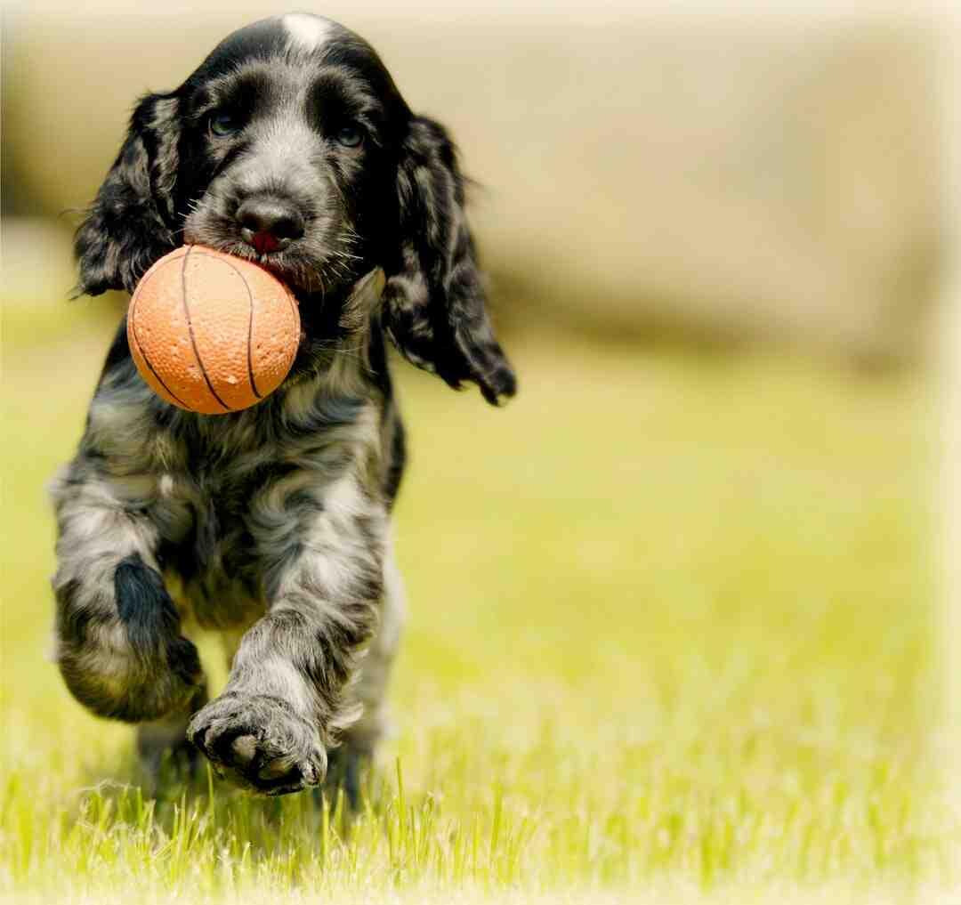 Comment apprendre des tours à un chien