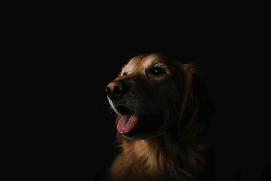 Comment voit un chien