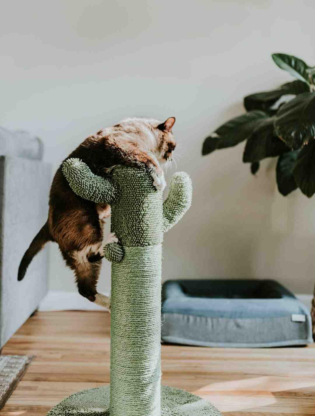 Comment protéger un sapin de Noël de son chat