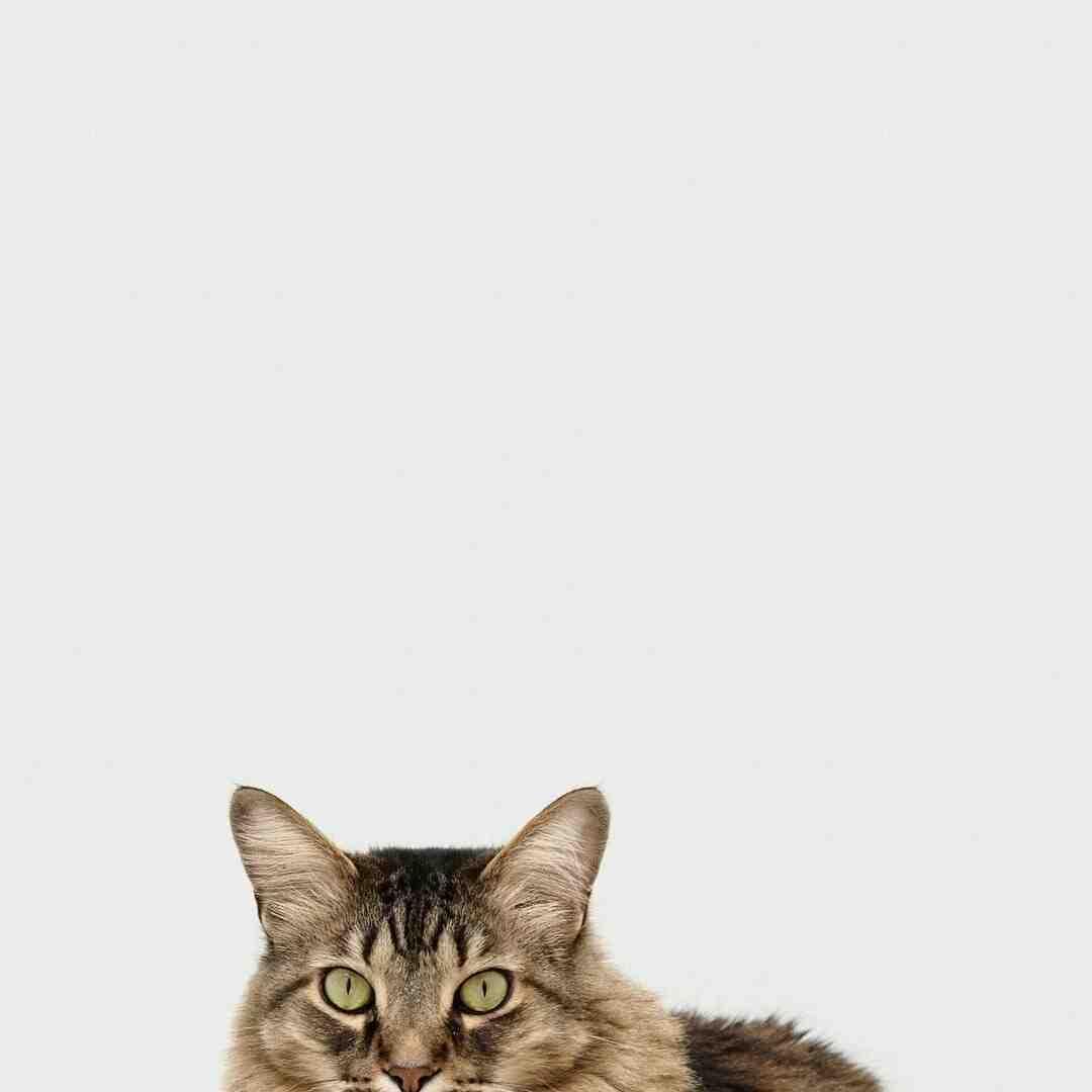 Comment savoir si la patte d'un chat est cassé ?
