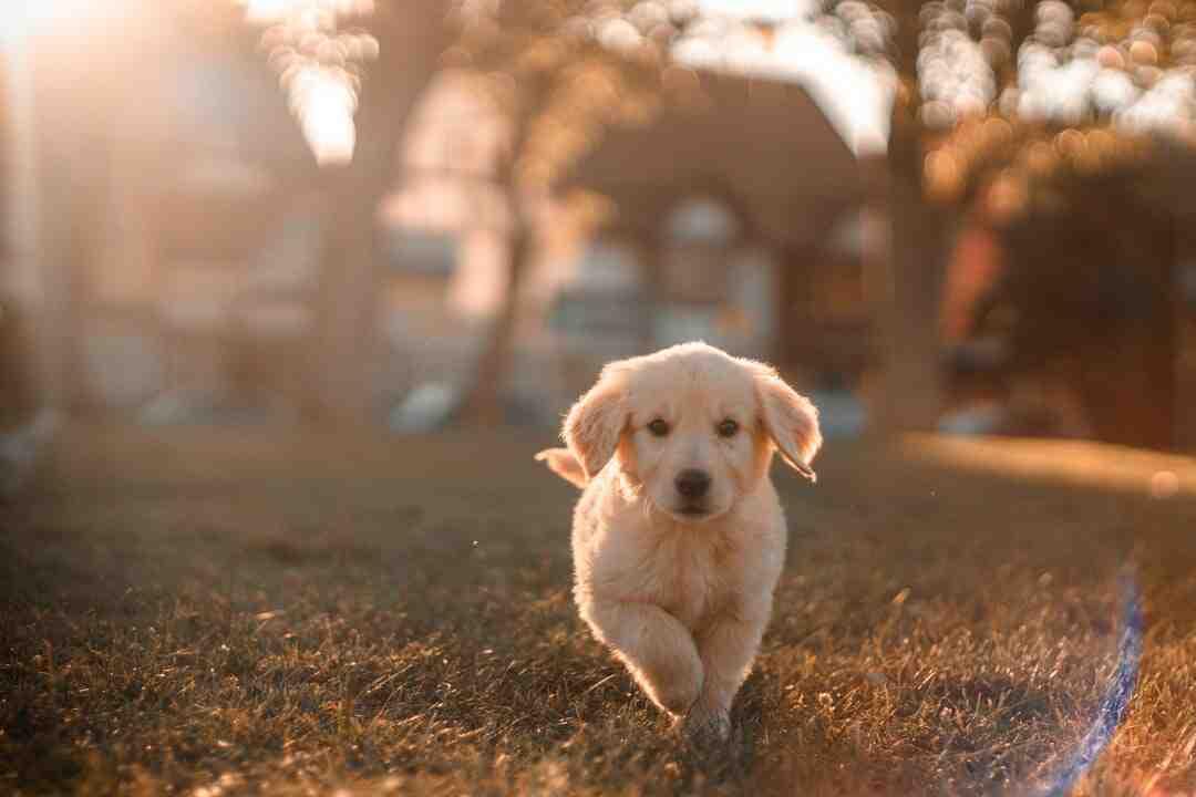 Comment un chien choisit son maître