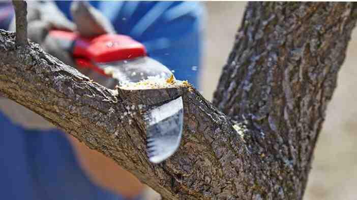 Quelle est la croissance d'un chêne ?