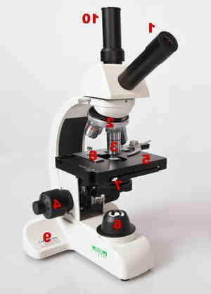 Quelle est la différence entre un microscope optique et un microscope électronique ?
