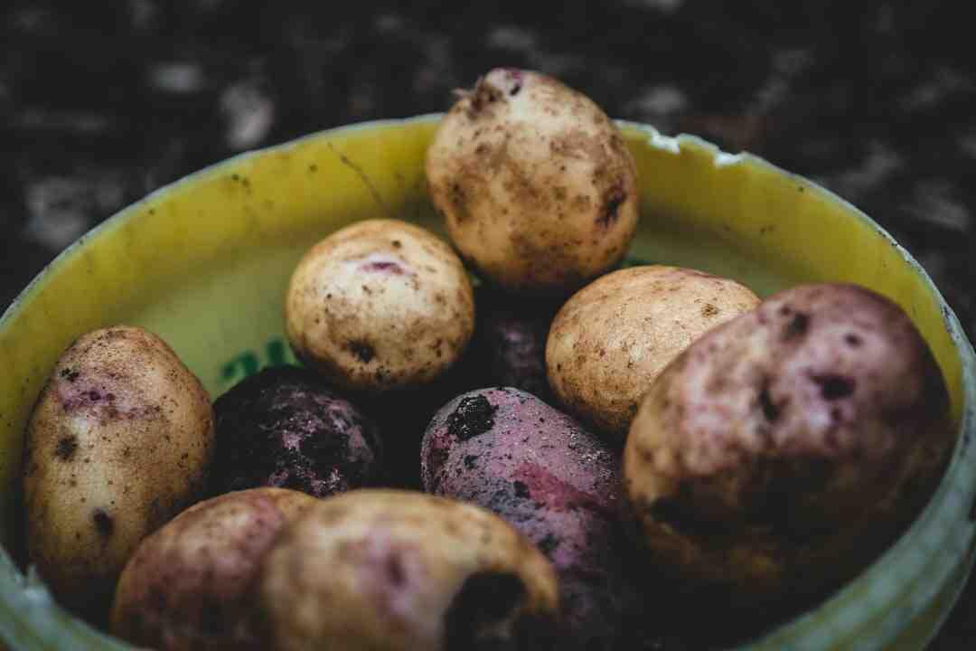Comment congeler des pommes de terre