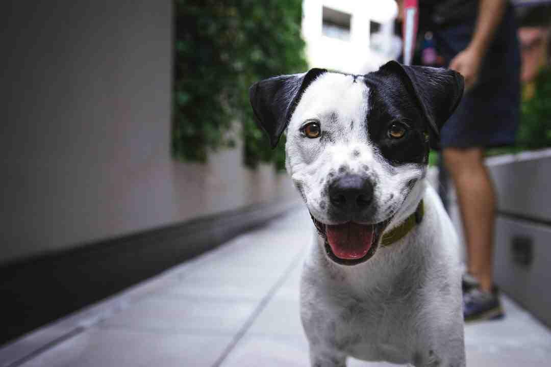 Quand apprendre des tours à son chien ?
